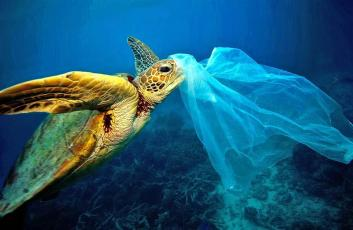 turtle-sea-waste